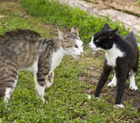 cat-behaviour-advice-img