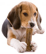 dog-behaviour-advice-img